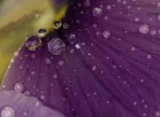 Macro Flower with water drops